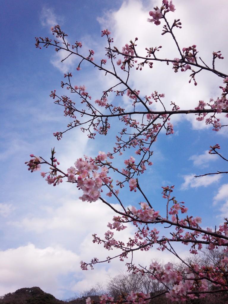 2014-03-04 sakuma_1