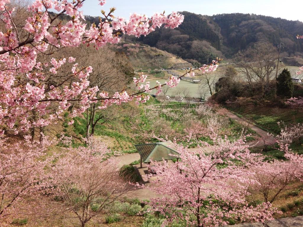 2014-03-04 sakuma_3